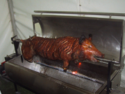 Hog on a spit roasting